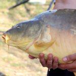 Délegyházi horgásztó